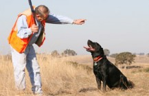 Hunting Dog Boot Camp